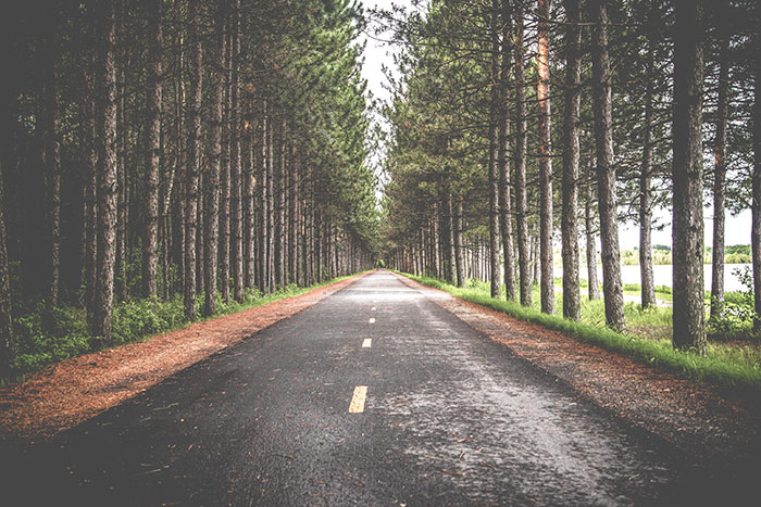 pine tree lined road image